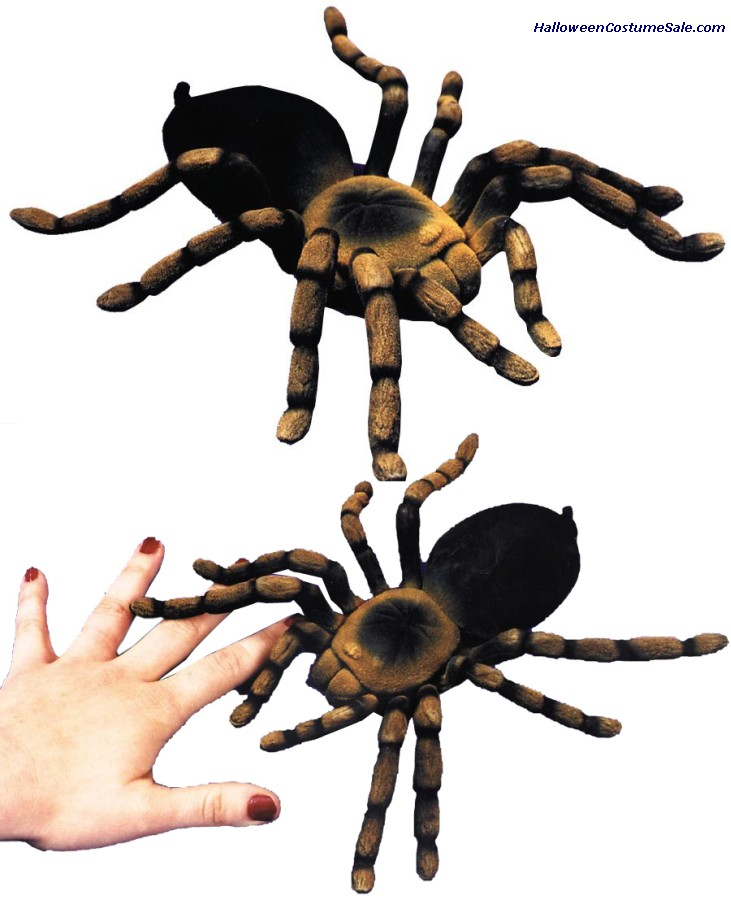 FLOCKED TARANTULA (10)