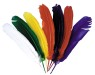 Indian Feathers - Assorted beautiful colorful feathers.